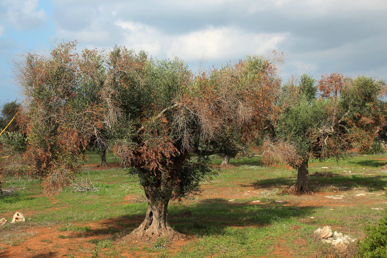 agricoltura nella manovra giallo-verde