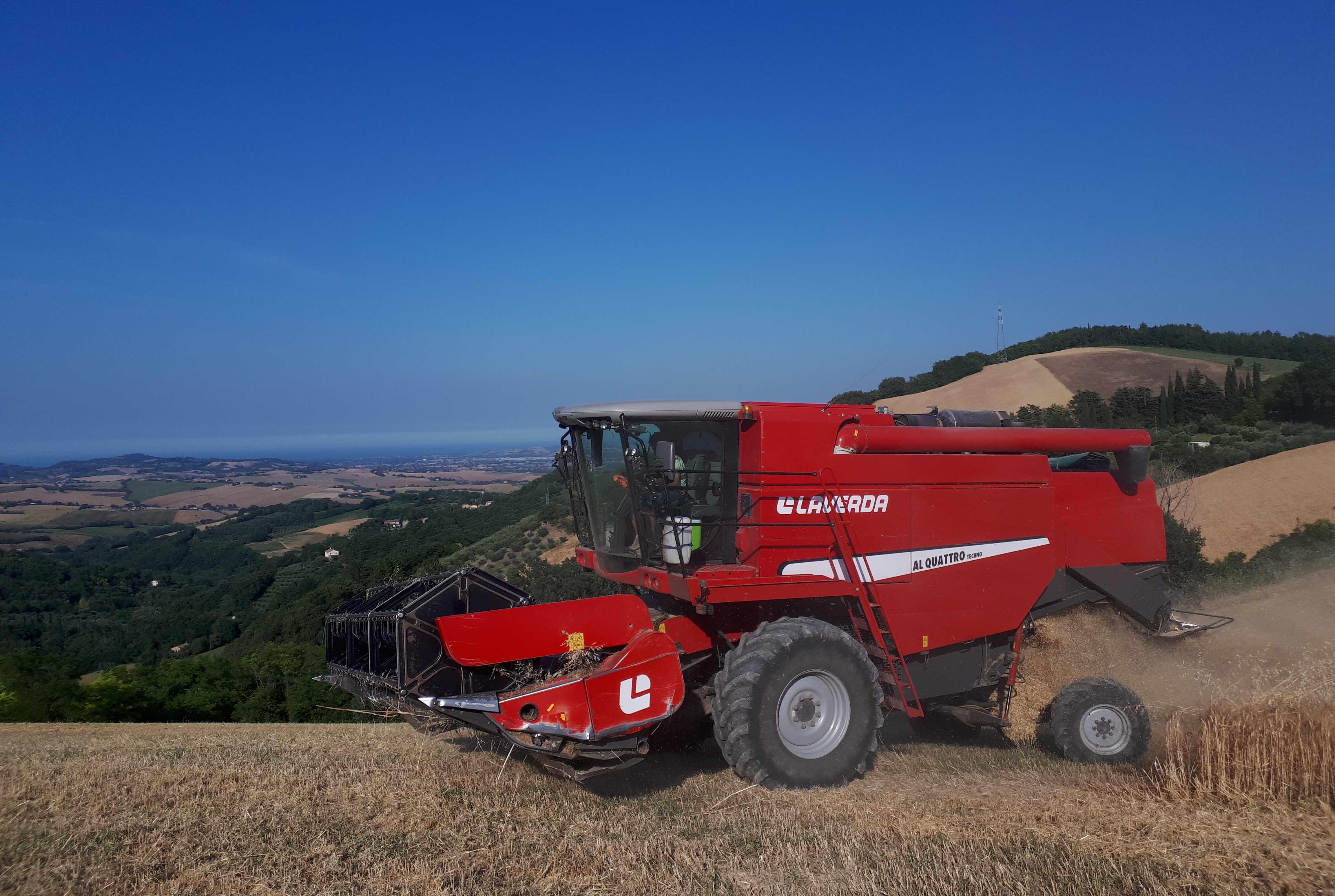 Maxi carico di grano canadese sbarcato in Sicilia, la solita beffa di mezza estate