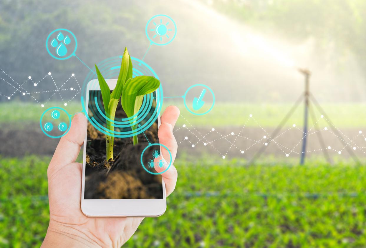 Agricoltura 4.0: incredibile crescita secondo l'Osservatorio Smart Agrifood